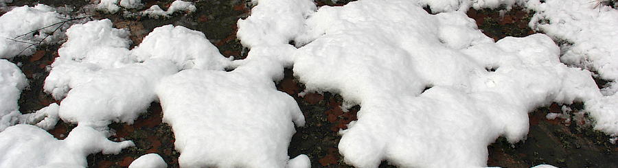 Snow patchy forest floor colcorr 900 245