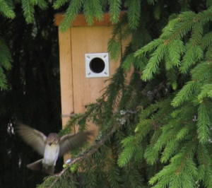 bird leaves birdbox